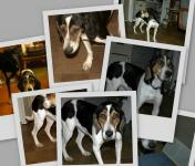 Thumbnail of Basil pictures collage - Click for full image